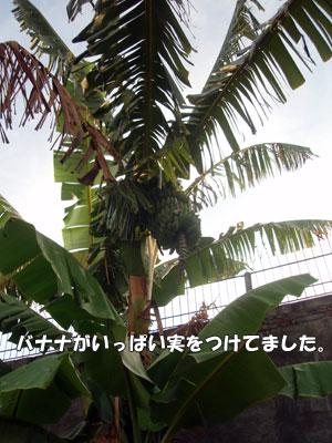 200805013-2.jpg