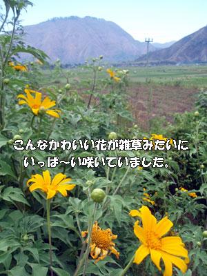 20081019-7.jpg