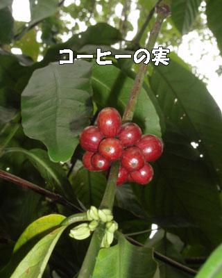 20081019-9.jpg
