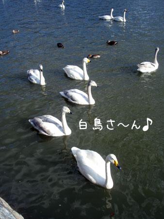20090327-1.jpg