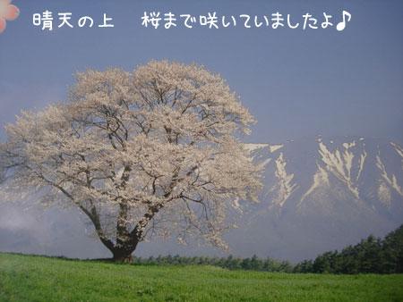 20090327-14.jpg