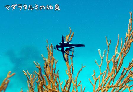 20090430-3.jpg