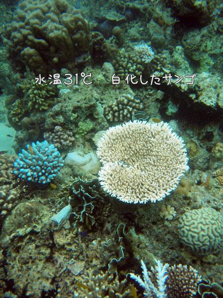 20090430-4.jpg
