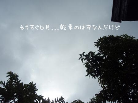 20090525-4.jpg