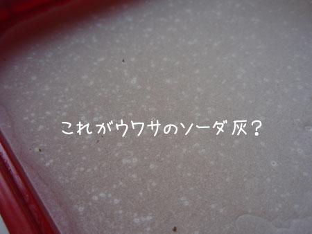 20090528-5.jpg