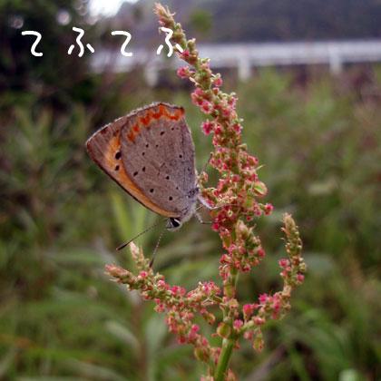 20100524-5.jpg