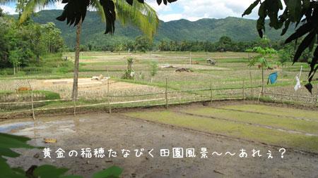 20100602-3.jpg