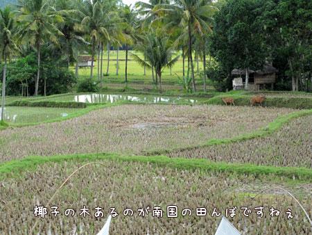 20100602-4.jpg