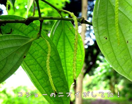 20101022-5.jpg