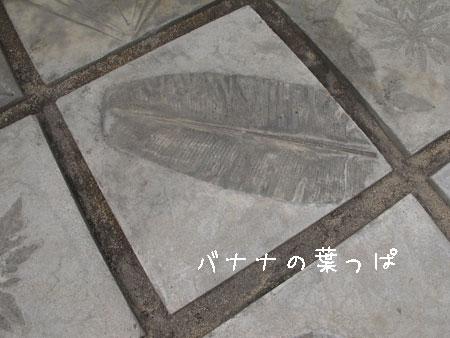 20110808-6.jpg