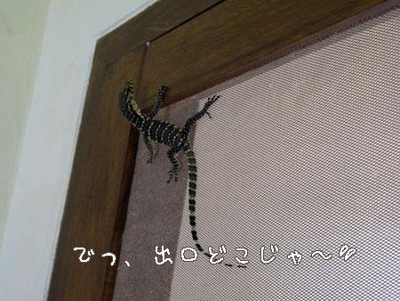 20111013-3.jpg