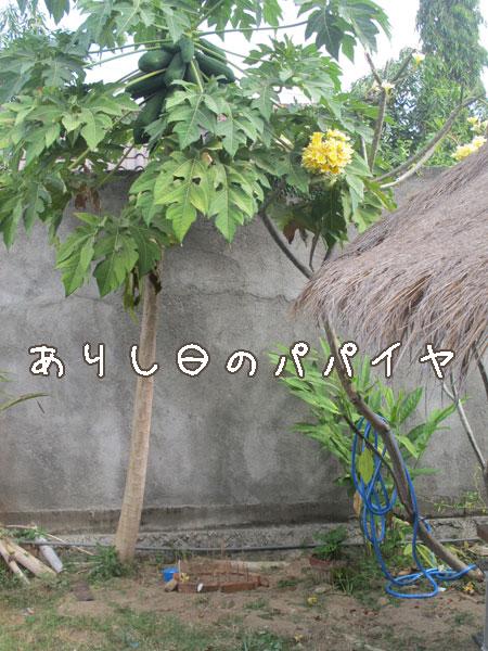 20120911-8.jpg