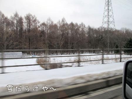 20110314-8.jpg