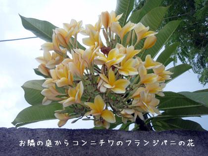 20100305-3.jpg