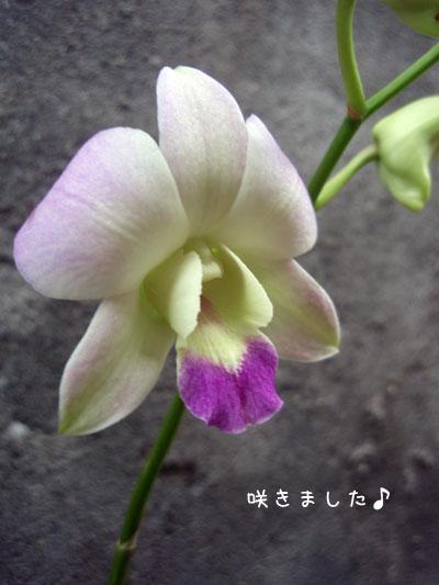 20100305-4.jpg