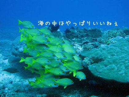 20100813-2.jpg