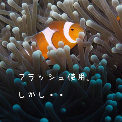 20100813-5.jpg