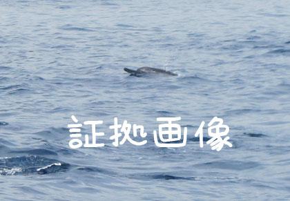 20100813-6.jpg