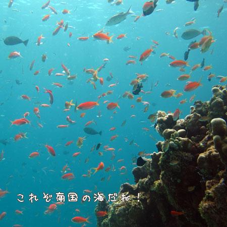 20110503-3.jpg