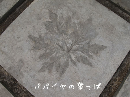 20110808-7.jpg