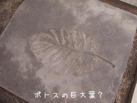 20110808-8.jpg